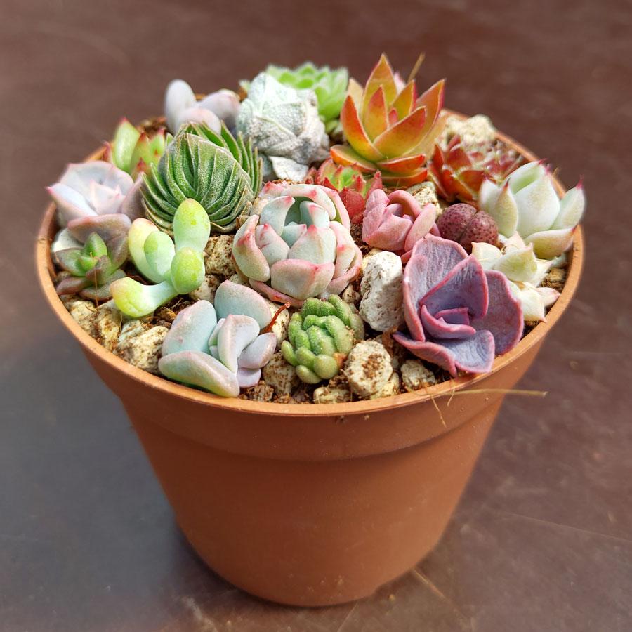 Bunga Kecil Dalam Pot
