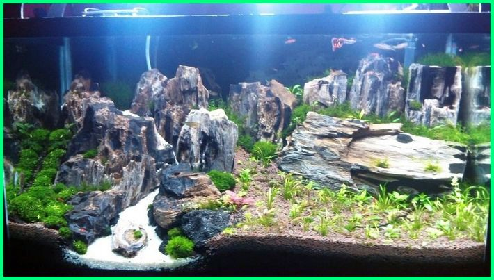 Aquascape Natural Style