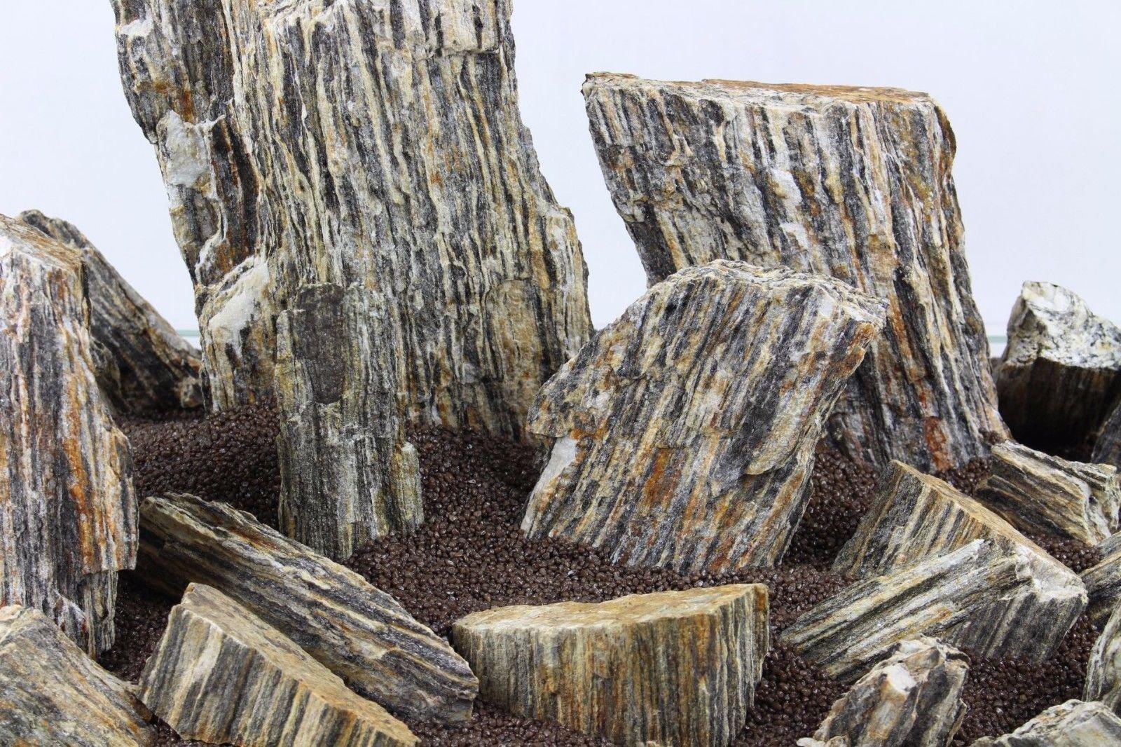 Batu Fosil