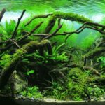 Freehand Aquascape Style