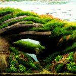 Jenis Gaya Aquascape