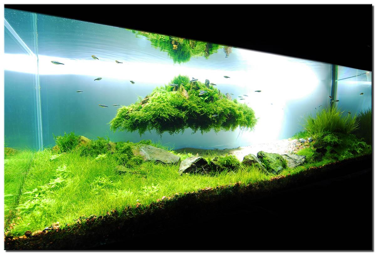 10 Jenis Tanaman Aquascape untuk Pemula tanpa CO. Mudah ...